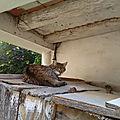 Les chattes profitent du beau temps en anjou