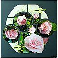 Camélia rose et blanc