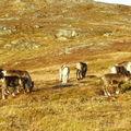 17-10-08 Sortie Montagne et rennes (130)