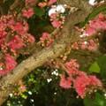 Australie Faune Flore Paysages - janvier 2005 (8)