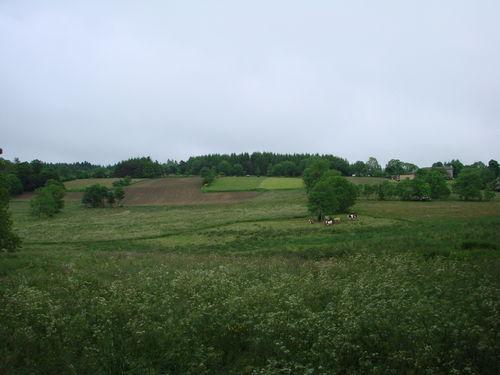 2008 06 16 Voici toute l'herbe qu'il y a cette année