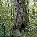 La forêt Domaniale de Montfaucon, monument naturel et vivant de la <b>guerre</b> 14-18. Lundi 09 septembre 2019.