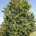 L' arbre des saisons ...