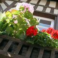 Balcon fleuri à Honfleur