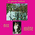 miss bohème