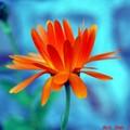 Fleur futuriste