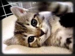 pr noms de chat en h ann e 2012 les chats d 39 audenge. Black Bedroom Furniture Sets. Home Design Ideas