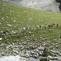 Aout 06 Alpes 20