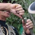 Retour sur l'initiation au <b>greffage</b> des oliviers