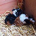 Bonne nouvelle ! Bienvenue à Minny et Daisy !