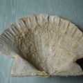 Ammonites and Co