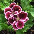 fleurs 094