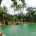 La superbe Venetian Pool de Miami