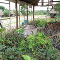 Pépinière de piñon blanco de la communauté Puerto Firmenza