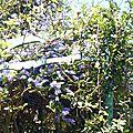 lianerevee