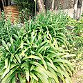 Quelques nouvelles du jardin
