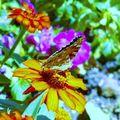 Papillon de lumiere :p