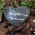 Zephirine Drouhin 8