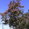 Arbustes variés à donner