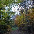 2009 10 30 Le sous bois l'automne