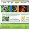 Nouveau lien : société française d'orchidophilie