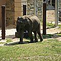 Smithsonian national park - ZOO (16)