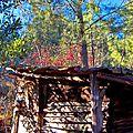 cabane au cerisier du japon