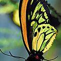 6- FLeurs et Papillons.