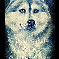 Carte Postale, Husky, Volcan (<b>peinture</b> à l'huile)