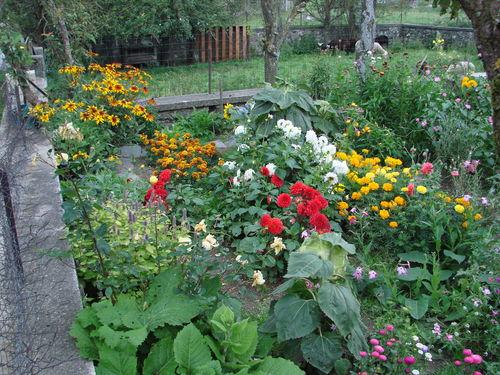 2008 09 16 Une partie des fleurs de mon jardin