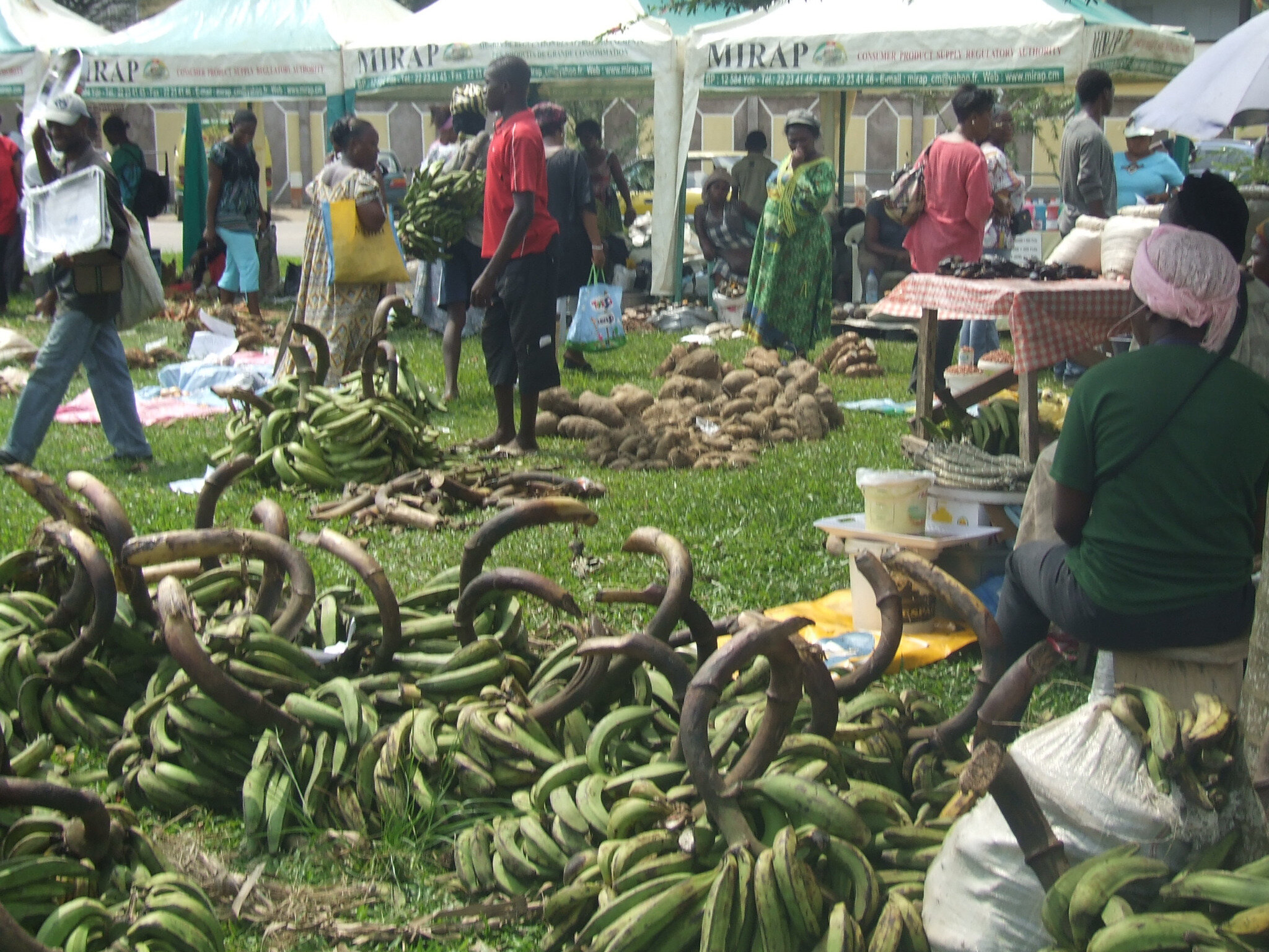 Sécurité alimentaire: Le Cameroun a peur