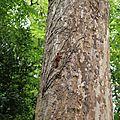 9N3A0489 Démo grimper rapide de Sciurus vulgaris