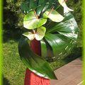 éventail de feuilles - avril 2011