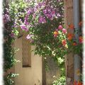 Provence 5