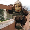 singes (8) [Résolution de l'écran]