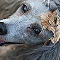 <b>Liang</b>, chien de forêt * <b>Liang</b>, forest dog