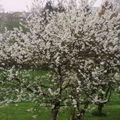 C'est l'printemps