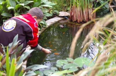 2006 11 T poissons rouges au parc du moulin
