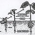Les Sciences: 3/ Le cycle de développement des êtres vivants