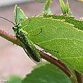 Un petit insecte au beau vert tendre presque fluo...