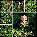 Presidio Flora San Francisco