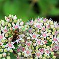 Des fleurs et des abeilles
