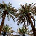 Al ain: palmeraie, mosquees et djebel hafeet...