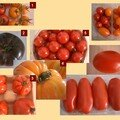 Quizz tomate