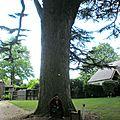 Arboretum Chateau d'Harcourt, Eure-8/2011