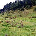 Le plateau du Cournau...