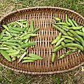 Potager en <b>permaculture</b> : nouvelles plantations à venir