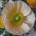 bouquet 2016 005