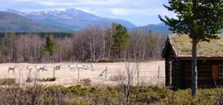 Alpage et rennes