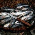 Sardines g